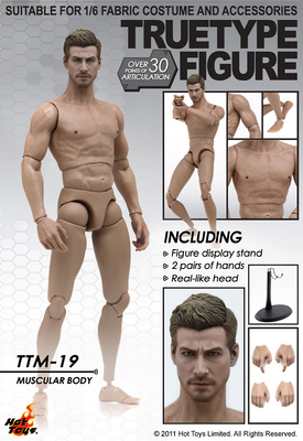 Caucasian, Muscular Body Version, 1:6, Hot Toys
